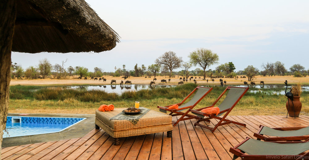 22b - Imvelo Safari Lodges - Bomani - The splash pool at Bomani overlooks our busy waterhole.jpg