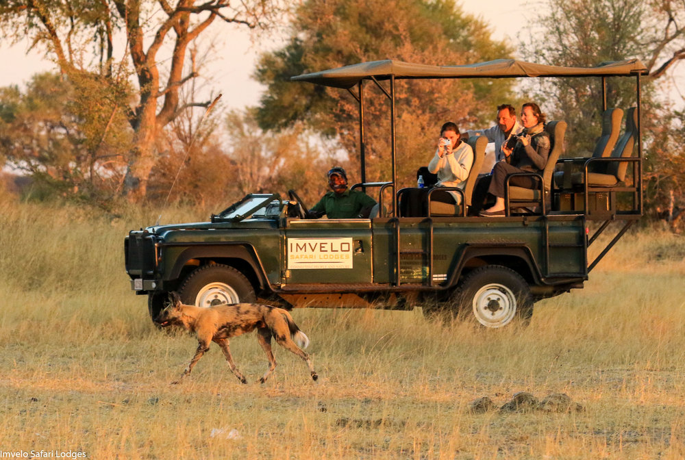 26a - Imvelo Safari Lodges - Bomani - Following hunts in the Bomani concession.jpg