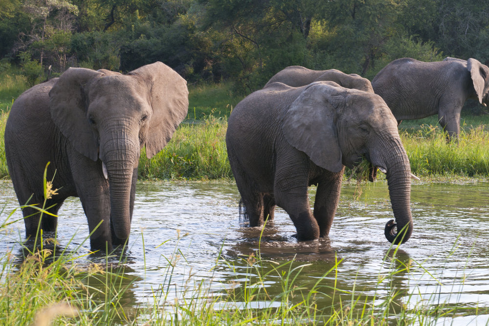 53. Imvelo Safari Lodges - Bomani Tented Lodge - Hwange elephants enjoying the wet season.jpg