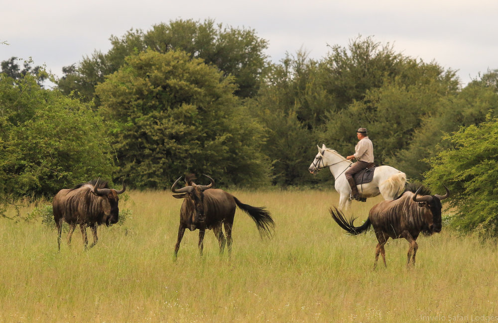 70 - Imvelo Safari Lodges - Horse riding.jpg