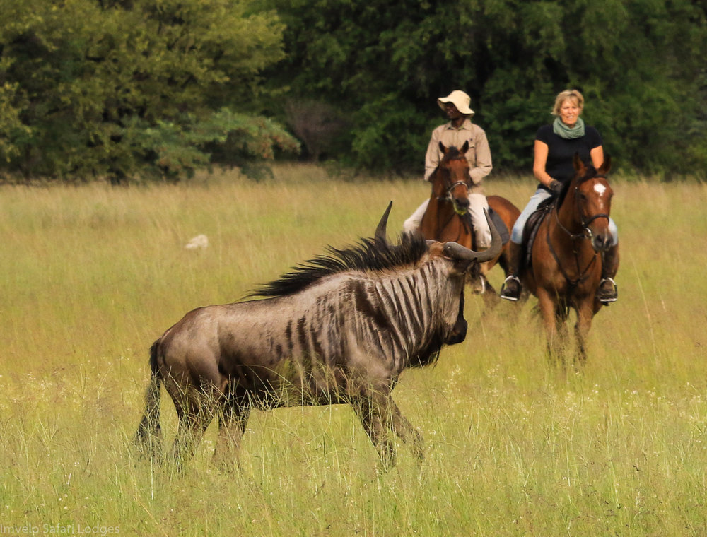 72 - Imvelo Safari Lodges - Horse riding.jpg