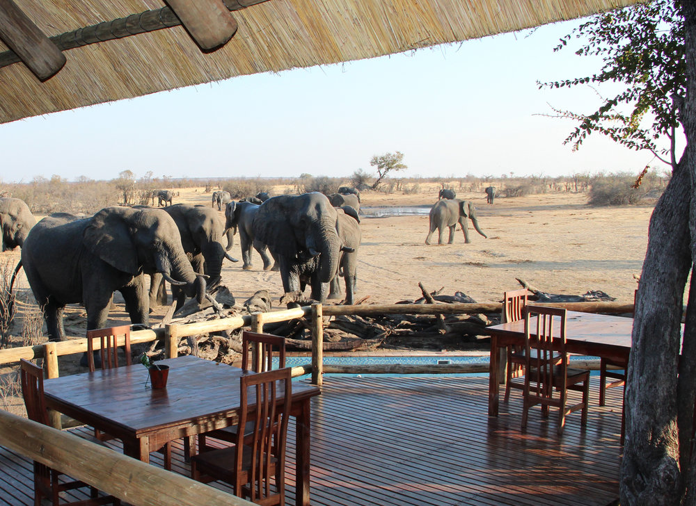 16. Imvelo Safari Lodges - Nehimba - Elephants in front of the lodge.jpg