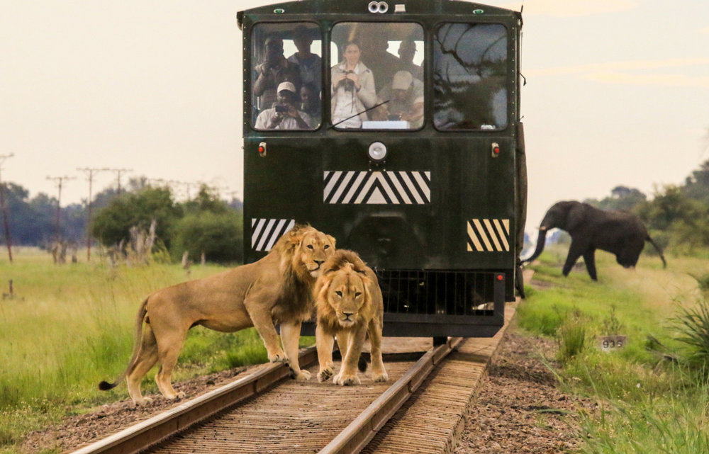 imvelo-elephant-express-train-safari-lions-elephant.jpg