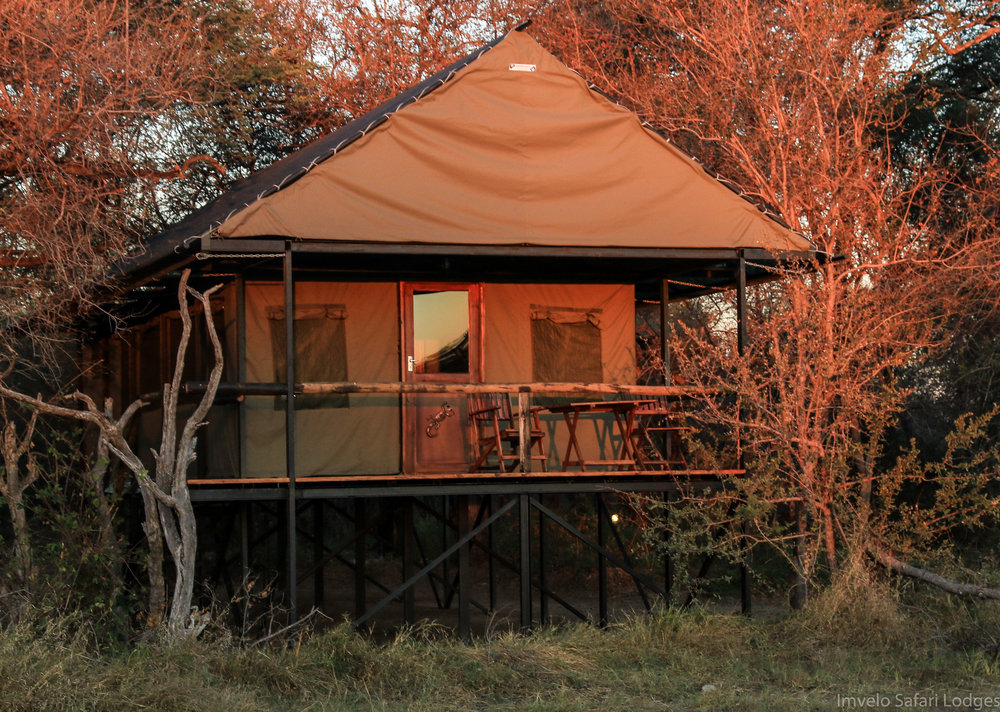 19b - Imvelo Safari Lodges - Bomani Tented Lodge - Exterior view of a Saddlebill Tent.jpg