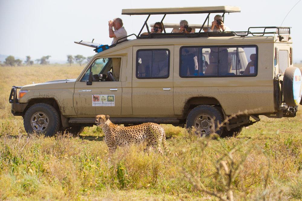 cruiser with cheetah.jpg