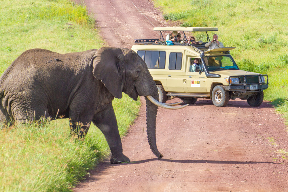 cruiser with elephant crossing.jpg