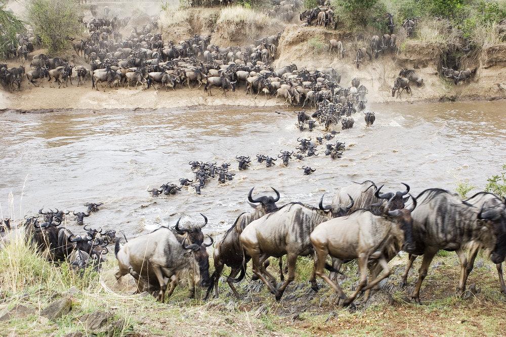 Migration crossing river.jpg