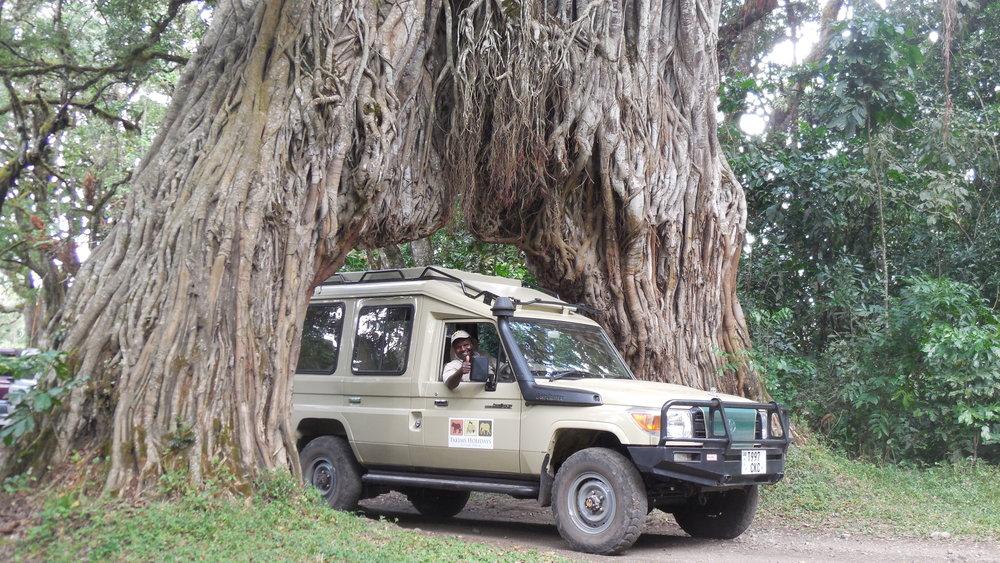 Vehicle under tree.jpg