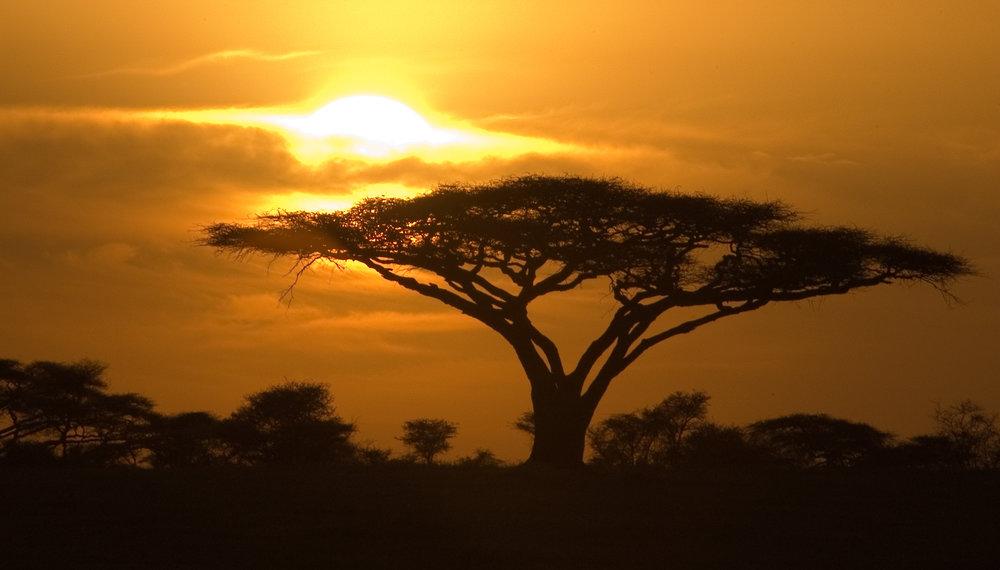 Tanzania yoga safari -