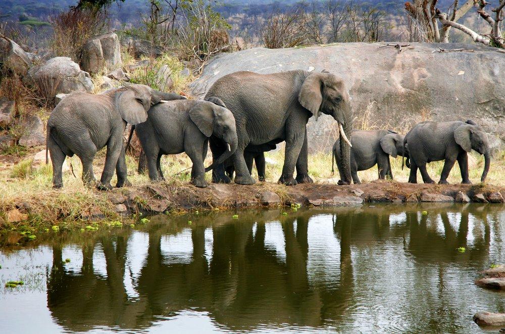 Meals: B | L    Flight: Serengeti - Arusha* (1 hr)