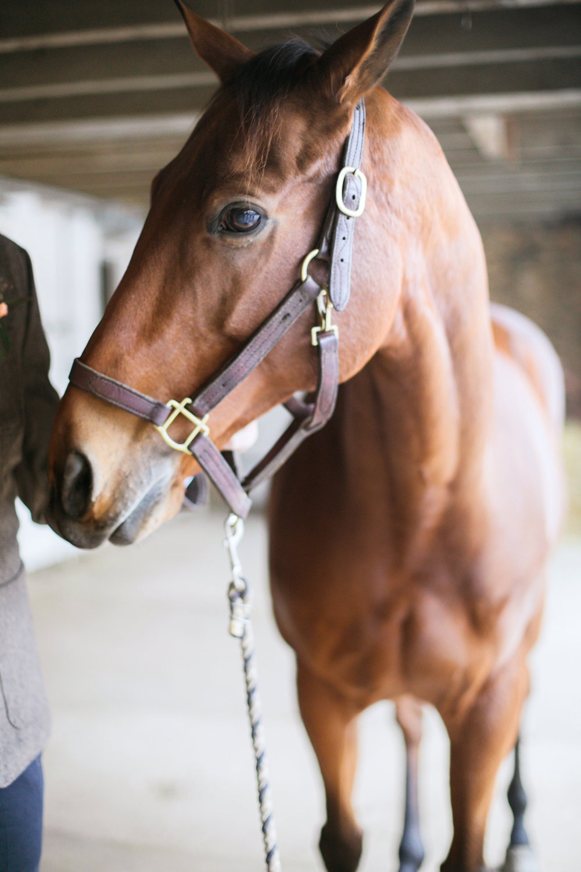 equestrian_shoot-530.jpg