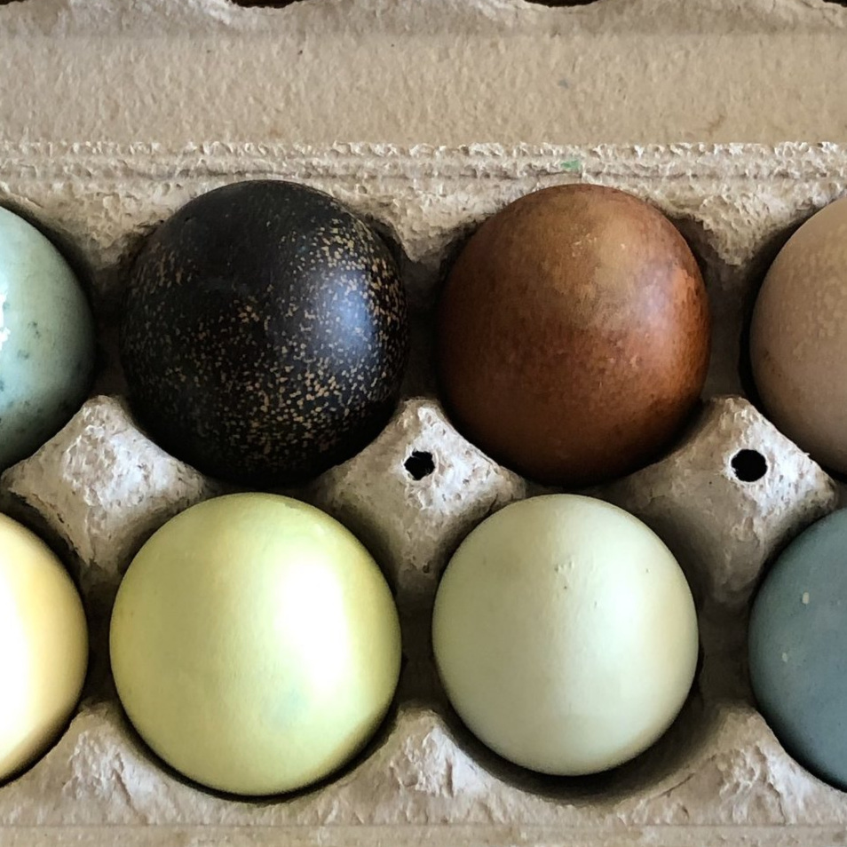 DYE BROWN EGGS TOO