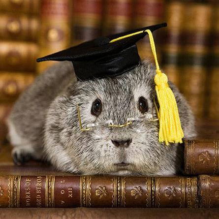 grading guinea.jpg