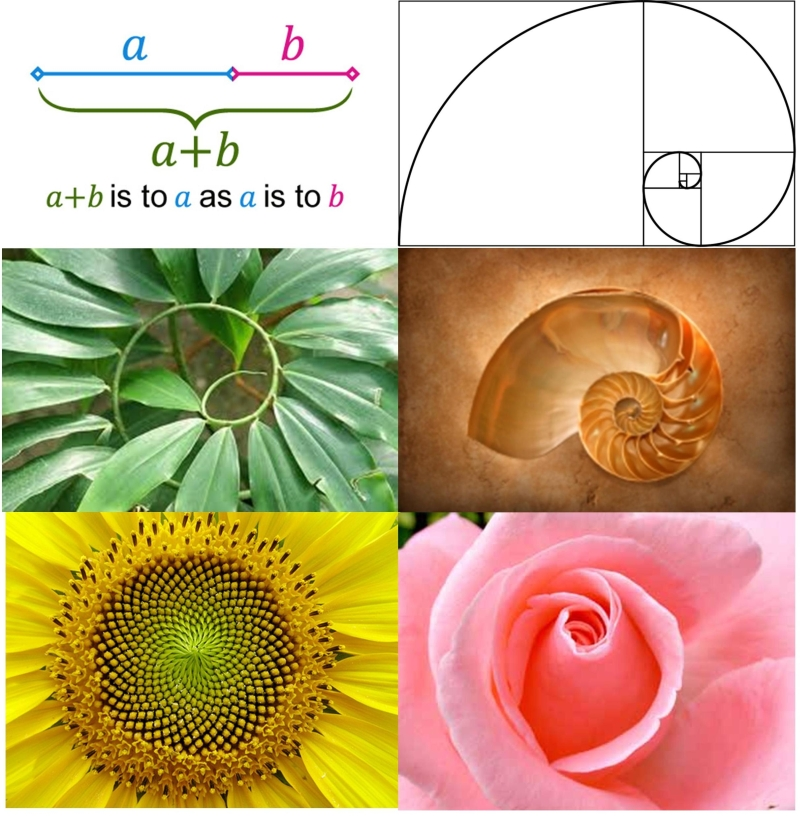 golden-ratio-in-nature.jpg