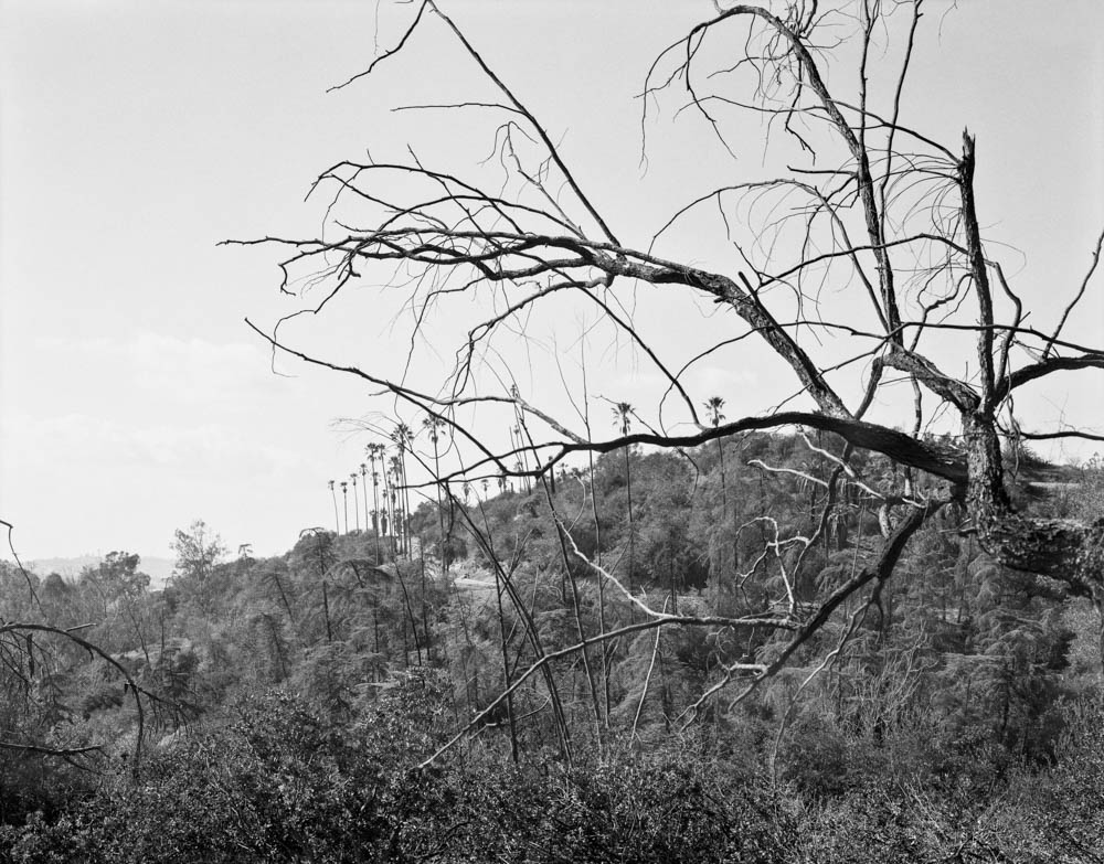 Virginia Wilcox's   project   Arboreal  , considers the natural landscape in an environment that continually changes due to urban growth and transition. Focusing on the hillsides of Los Angeles, her black and white capture of trees and flora is interrupted by the encroachment of humans, affecting the urban ecological spectrum in ways large and small.  We reconsider our definition of landscape as pastoral and calming, now challenged by objects, structures, and behaviors that are certainly less than beautiful.  Arboreal  opens at Los Angeles'   Actual Size Gallery   January 27th from 7-10 pm. The show will run through March 11th, 2018.  Virginia Wilcox lives and makes work in Los Angeles. She received an MFA from University of Hartford's Low-Residency Program in 2017 and a BFA in photography from Bard College in 2008. She has shown work in galleries and public art installations throughout the United States including Joseloff Gallery,Hartford; Glass Box Gallery, Seattle; Slideluck, LA;  the Hedreen Gallery, Seattle; and Photographic Center Northwest, Seattle.