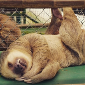 Current mood: Sassy and Sloth-like.  #slothsaturday