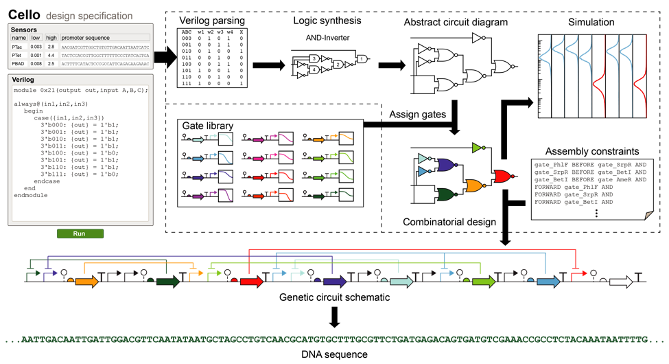 Overview of the original Cello platform [7]. A Verilog specification is automatically compiled to a DNA sequence that encodes a genetic circuit.