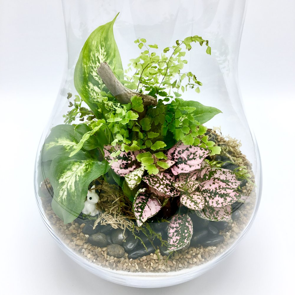 Tropical Terrariums  -