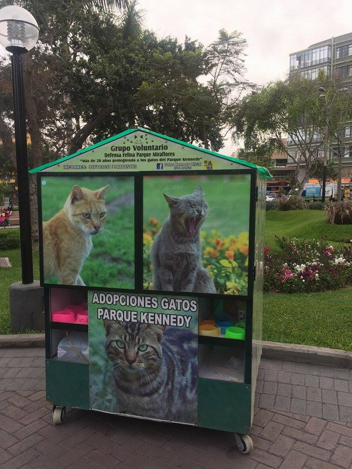 Cat adoption at Kennedy Park