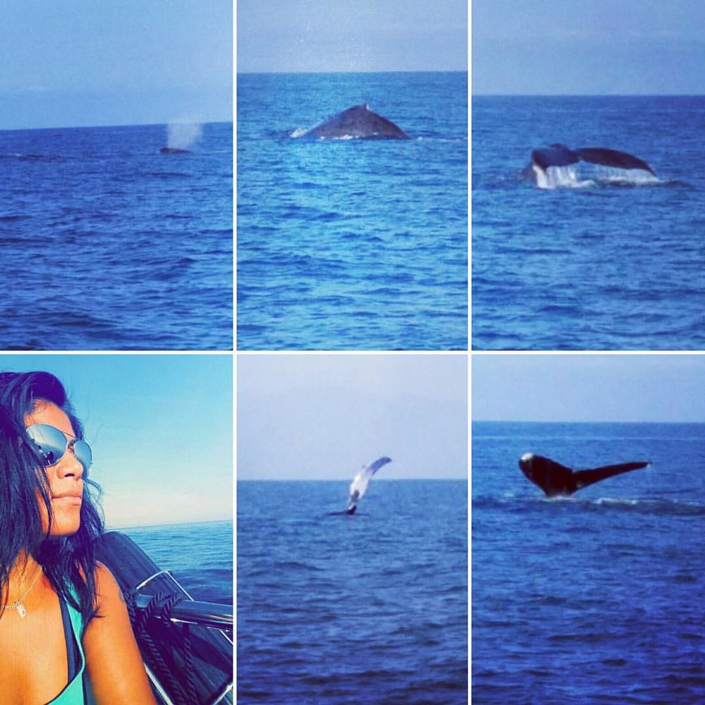 Whale watching in P.V.