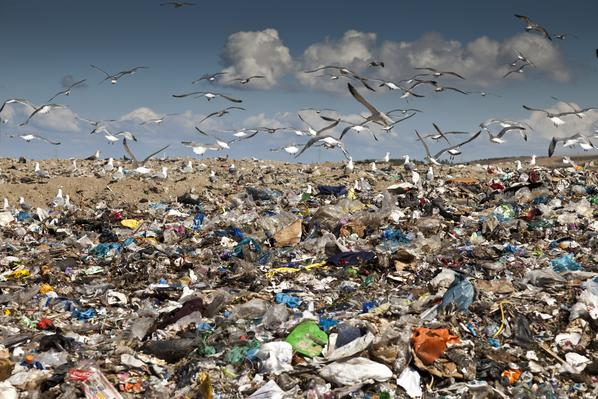 Birds flying over Landfill  Photo by PBS Learning Media