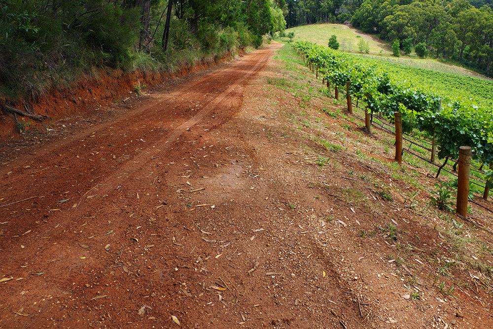 The deep red clay that underlays our Basket Range chardonnay vineyard.