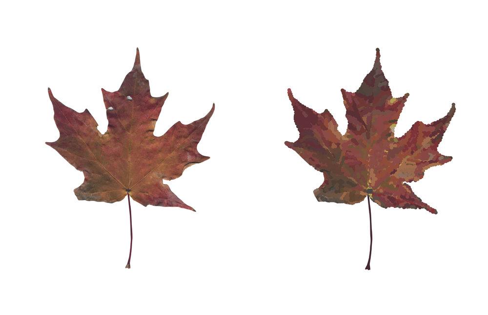Leaf translation; 2017 Graphic translation of a leaf