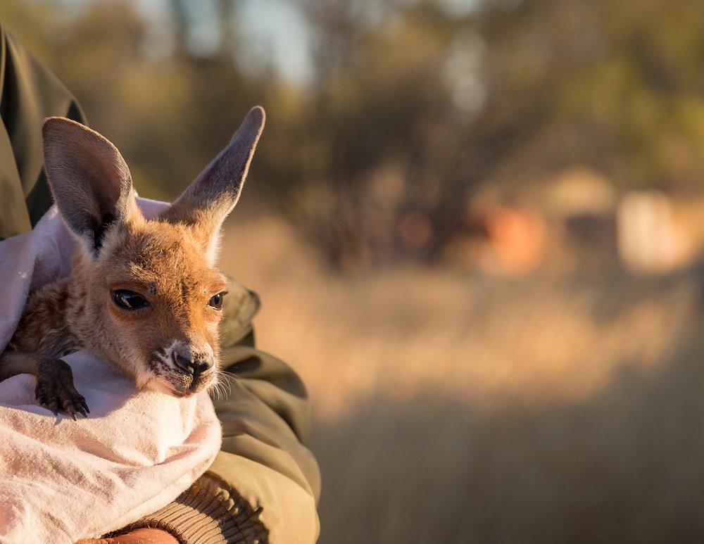 Milly at the Kangaroo Sanctuary