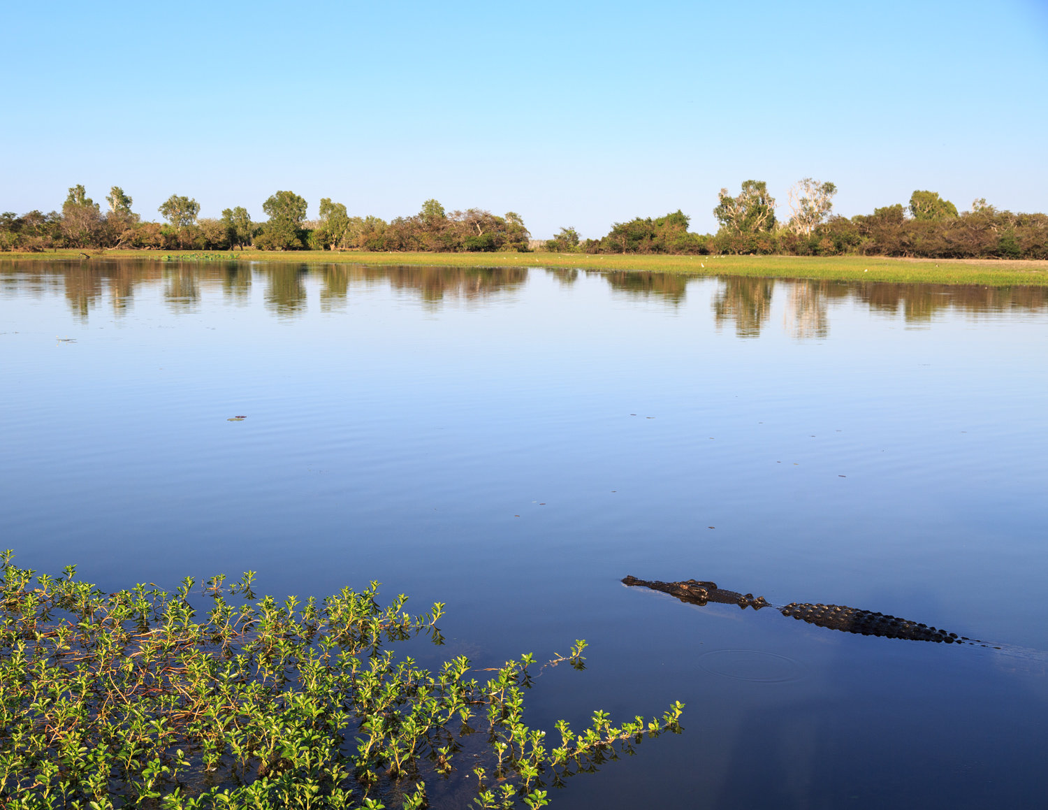The best things to do in Kakadu: Yellow Water Cruises