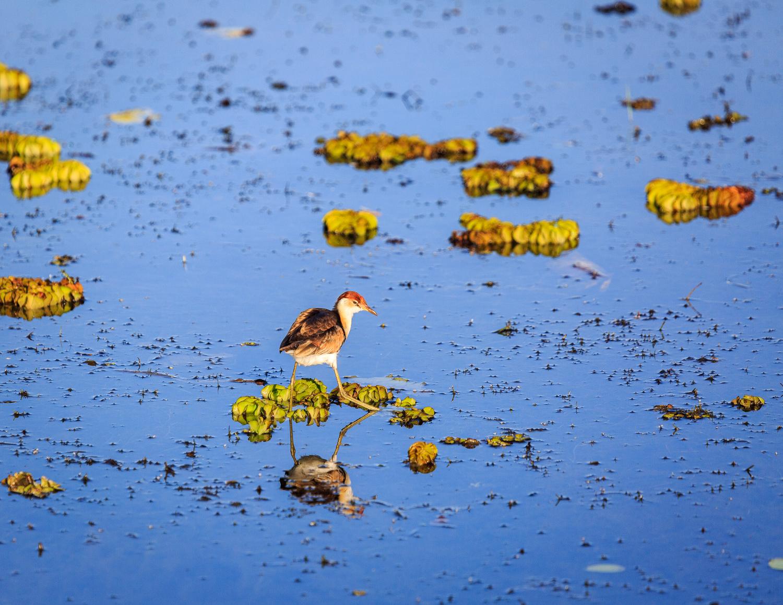 The best things to do in Kakadu: Yellow Water Cruises