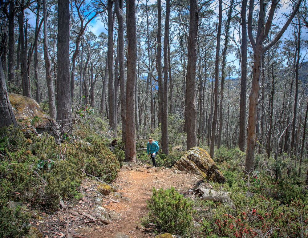 The hike up to the Walls of Jerusalem, Tasmania