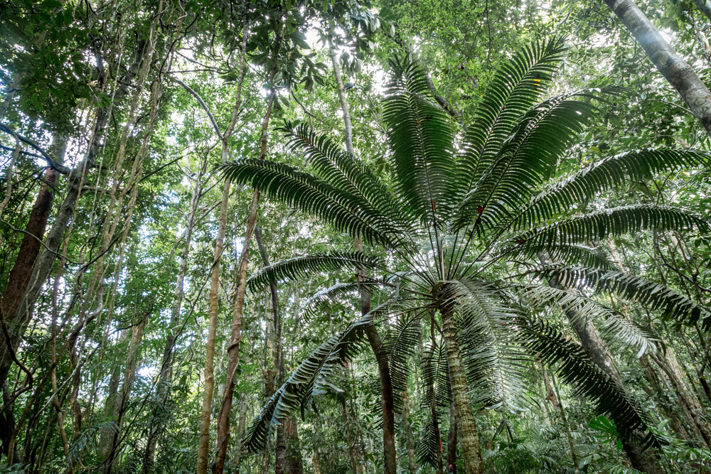 Must-see places in Australia: The Daintree