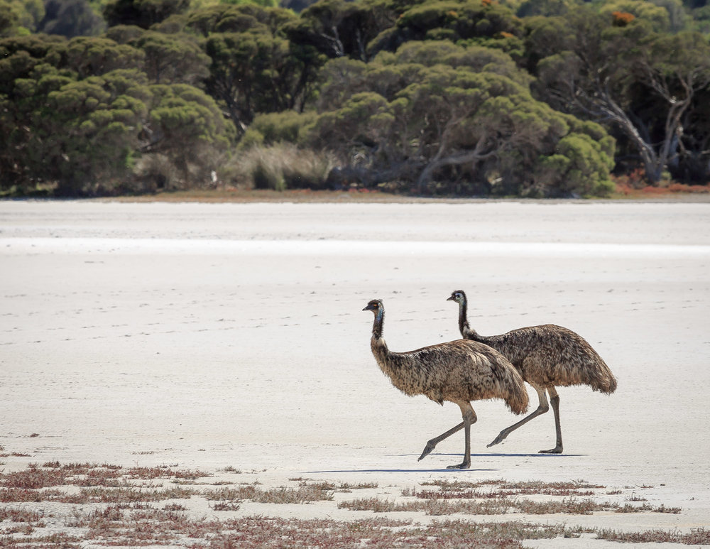 Must see places in Australia: Coorong, South Australia