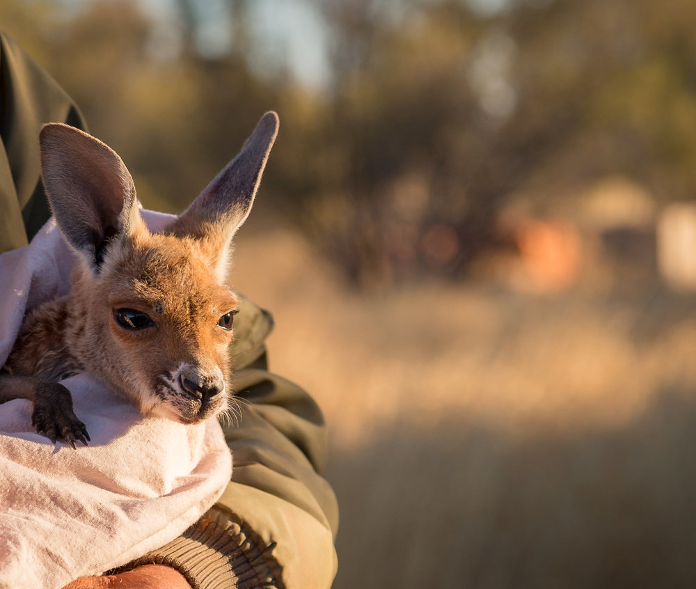 Instagrammable spots in the Outback: The Kangaroo Sanctuary