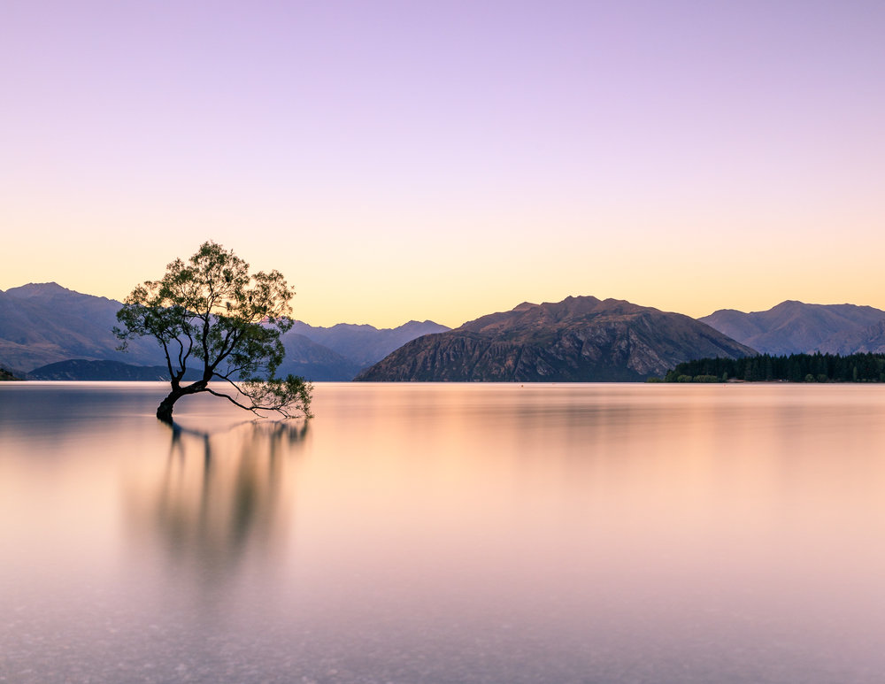 That Wanaka Tree, New Zealand
