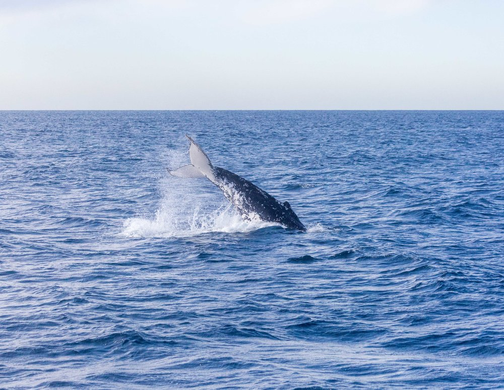Best things to do in Sydney: Whale Watching