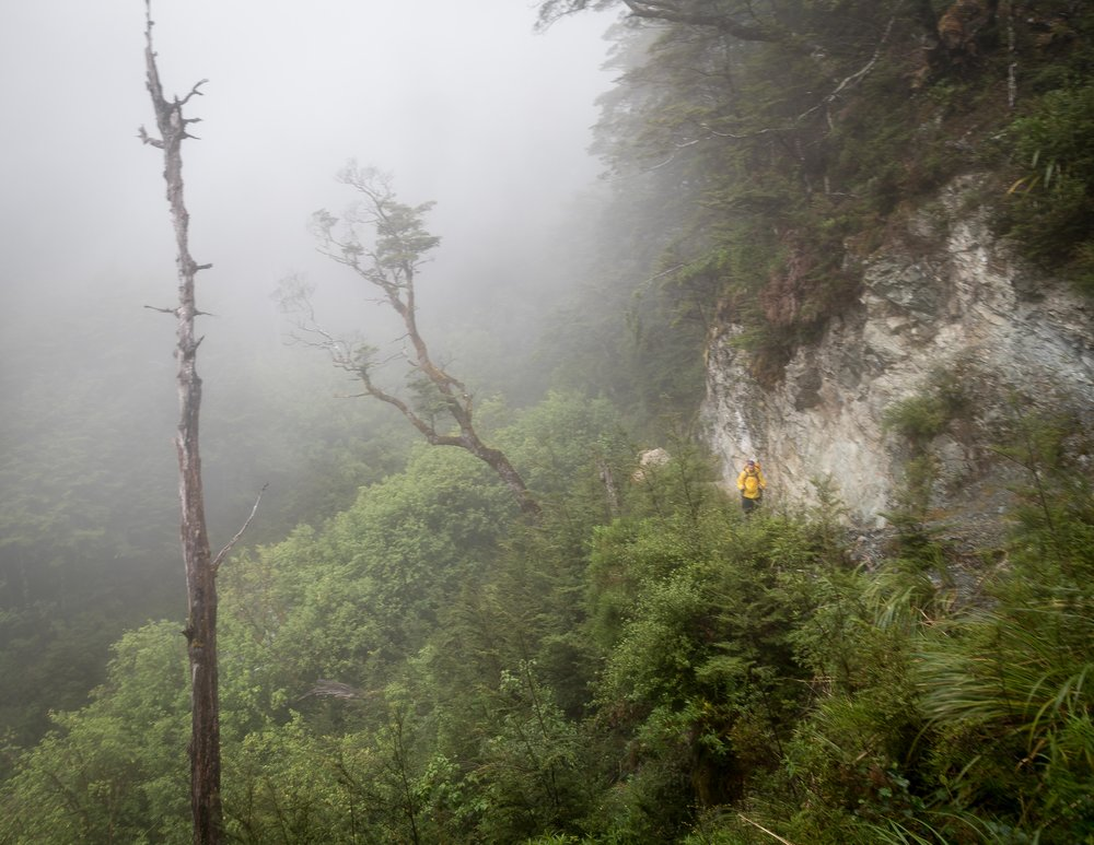 The Routeburn Track: Routeburn Flats to Routeburn Falls