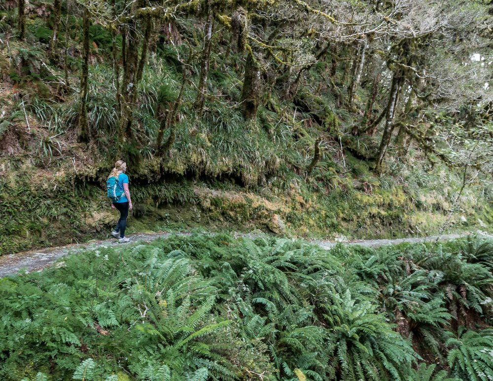 The Routeburn Track: Earland Falls to Howden Hut