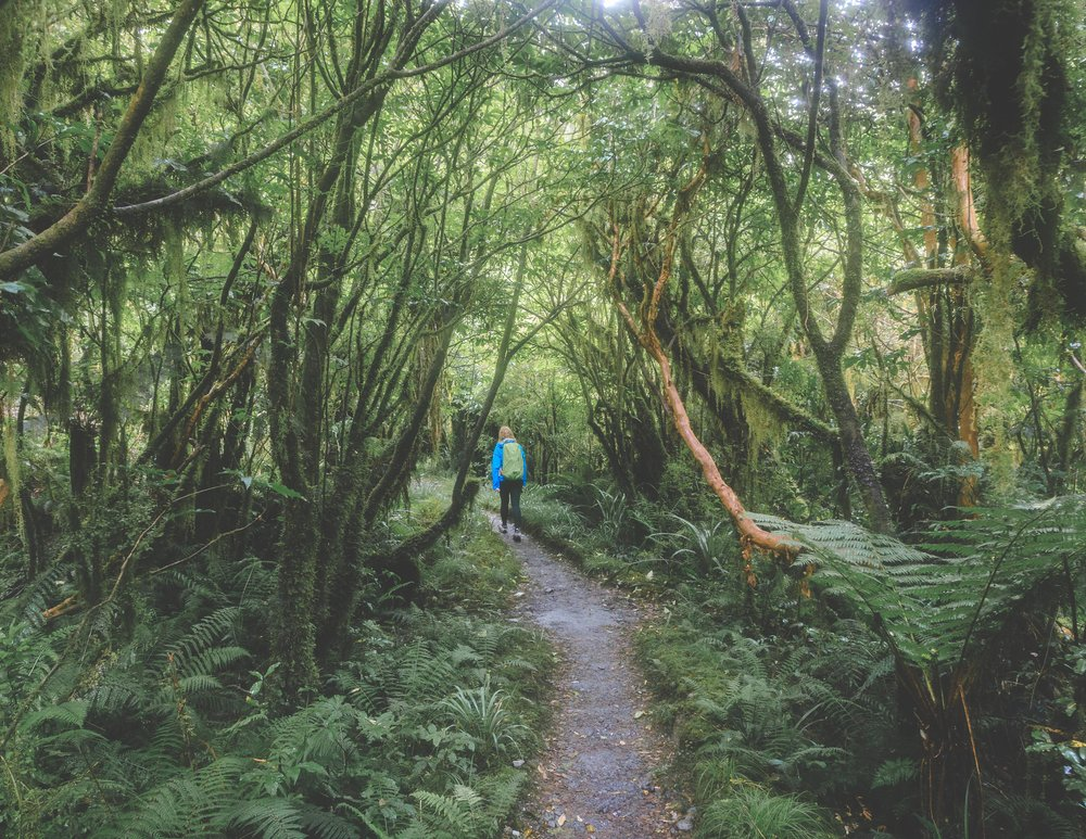 The trail to Sandfly Point, Milford Track