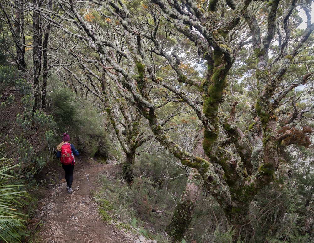 The hike down to Iris Burn on the Kepler Track