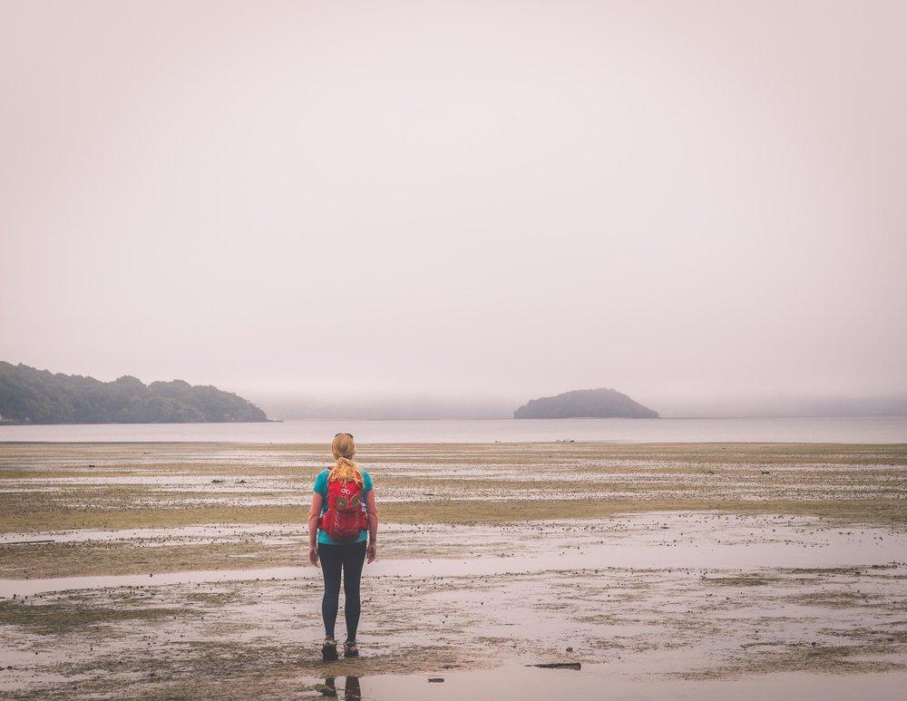 Foggy landscapes, Rakiura Track