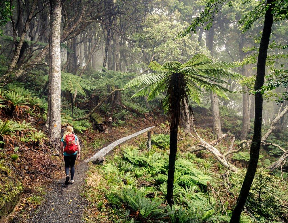 Rakiura Track, Stewart Island