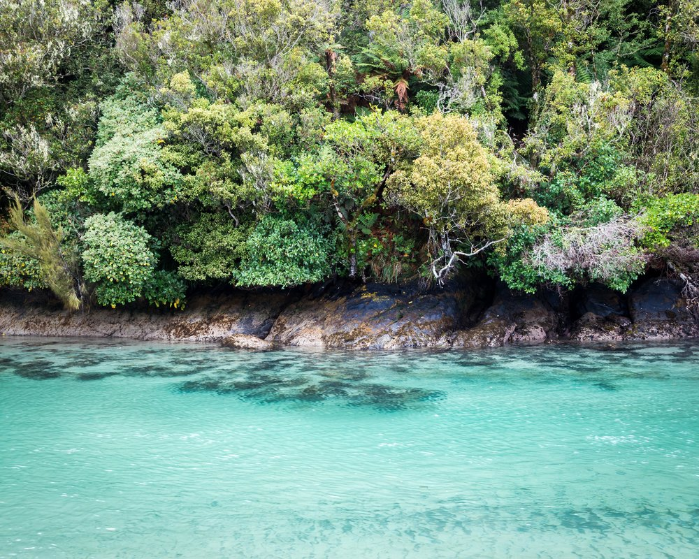 Stunning blue water on the Rakiura Track, Stewart Island