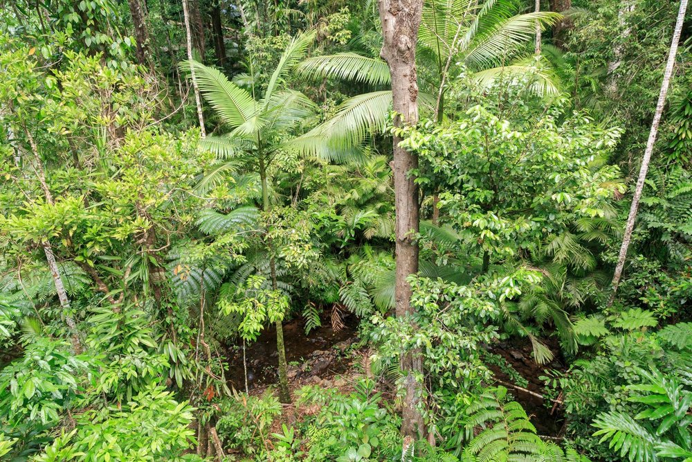 Daintree Discovery Centre, Queensland