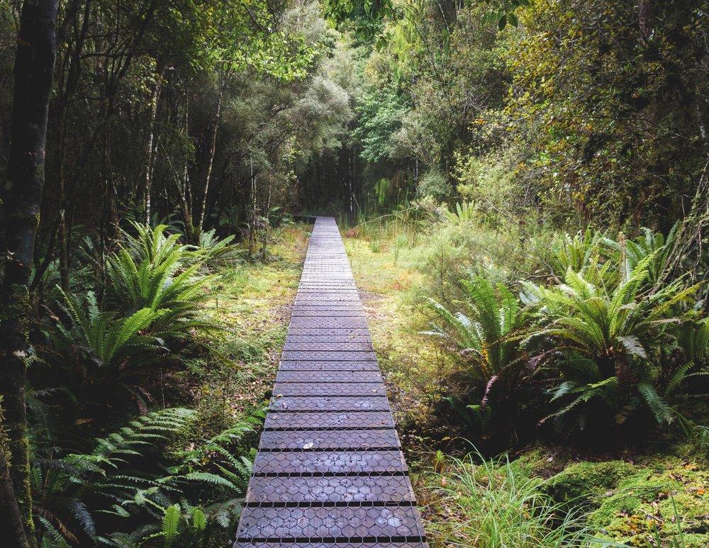 The Rakiura Track, Stewart Island