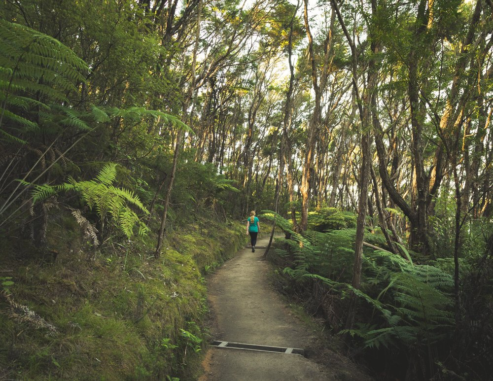 Evening glow on the path in Abel Tasman Track
