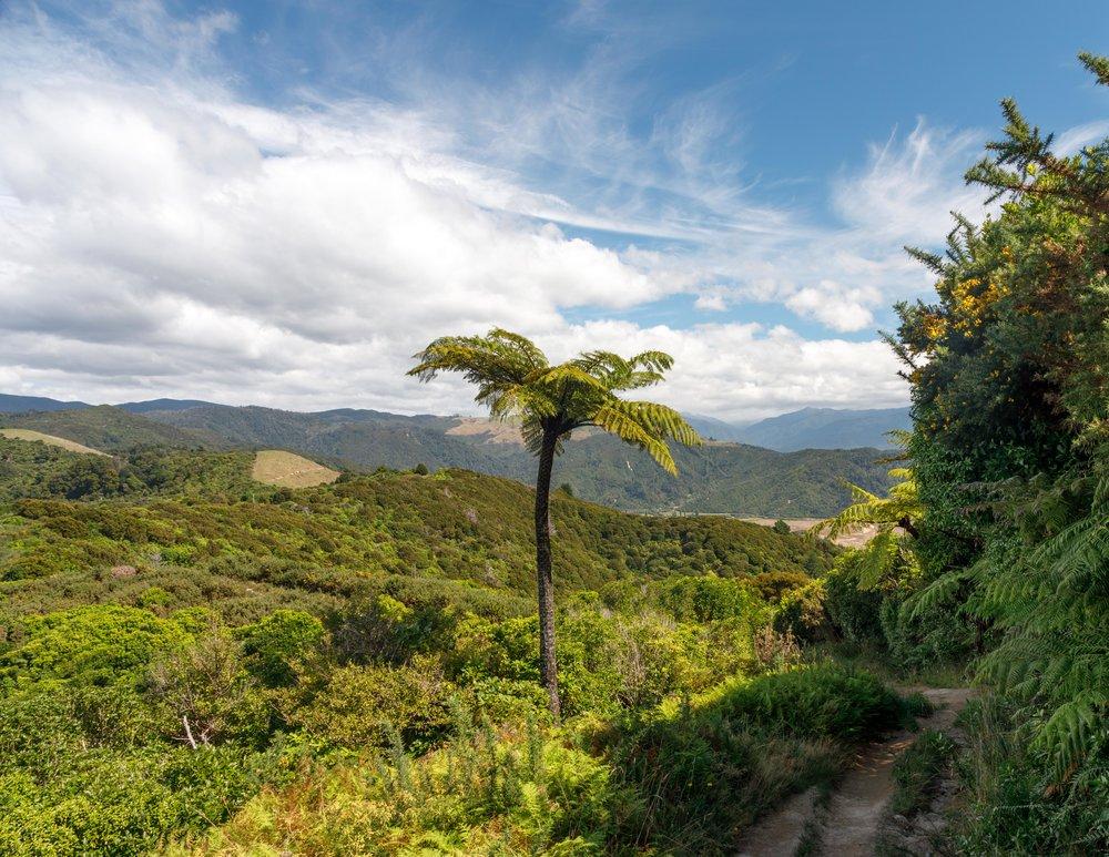 Gibbs Hill Track, Abel Tasman