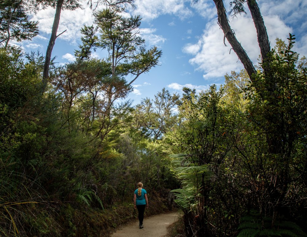 The track on the Abel Tasman Track