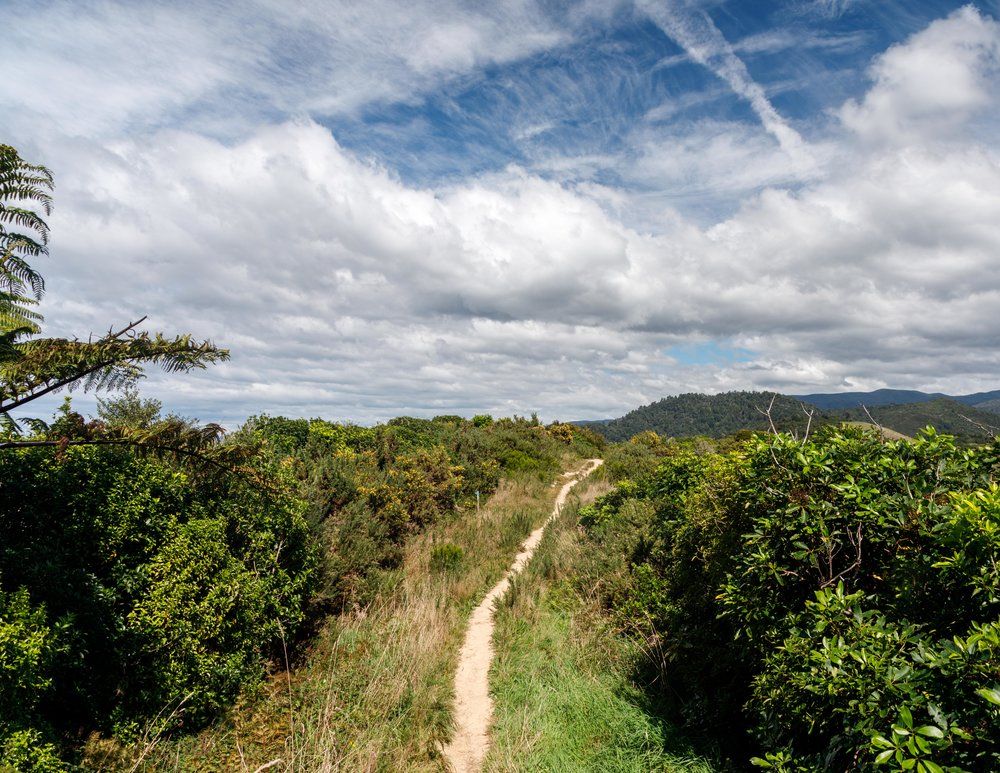 The Gibbs Hill Track