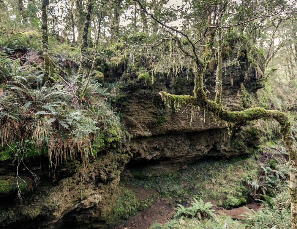 The Enchanted Forest, Heaphy Track